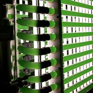 Photobioreactor 100 Litre microalgae cultivation in the lab