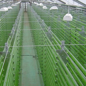 Photobioreactor for the industrial Microalgae Production