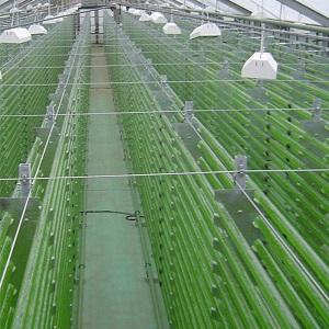Photobioreaktor für die industrielle Produktion von Mikroalgen